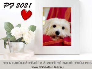 PF 2021 (all you need is love)